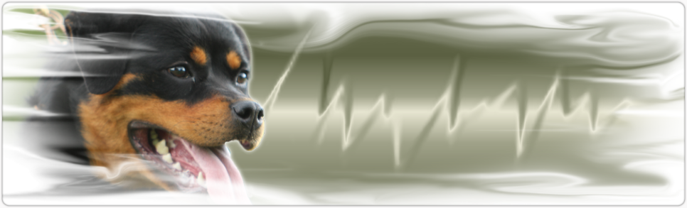 nicky rottweiler female logo
