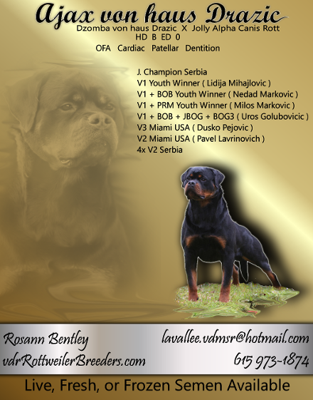 rottweiler catalog add