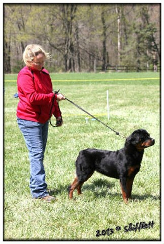busa rottweiler female at show